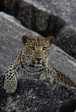jawai - The Leopard's Lair